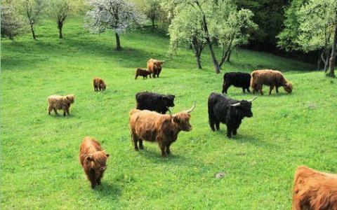 amon-farma-slovenija
