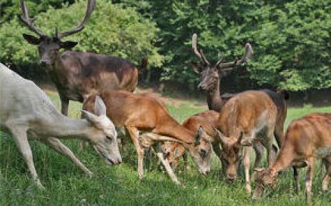 jelenov-greben