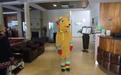 Hotel Arena - Zlatna lisica.jpg