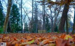 ljecilisni_perivoj_-_julijev_park_daruvar_autor_ratko_vukovic.jpg